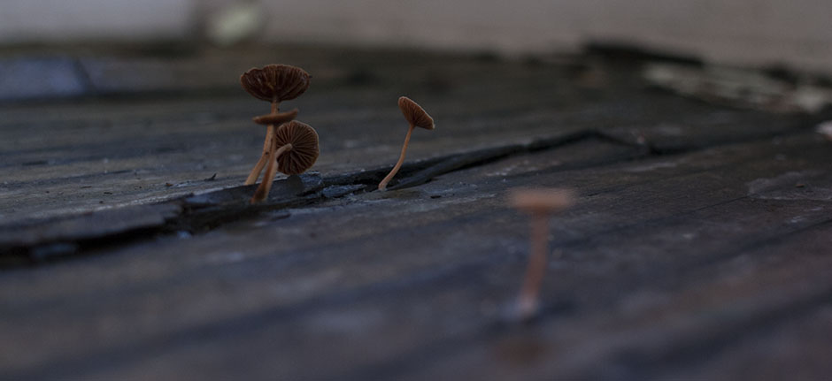 This should be a photo of tiny mushrooms growing from the floor.